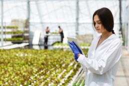 Donna che esegue controlla qualità su ortaggi all'interno di una serra