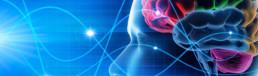 Neuromarketing: vendere toccando le corde giuste - Illustrazioen 3d del cervello umano o reti neurali